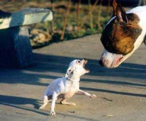 Polisens utvärdering av farliga hundar enligt lag (2007:1150)