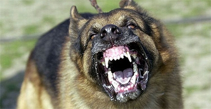 german-shepherd-snarling-and-showing-teeth
