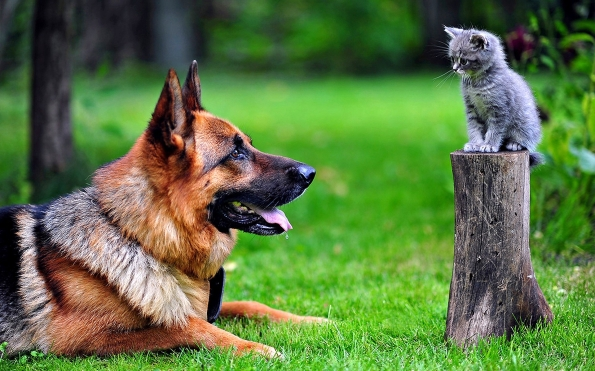 dog_cat_grass_german_shepherd_65061_1920x1200